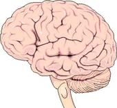 Le cerveau a combien d'hémisphère?