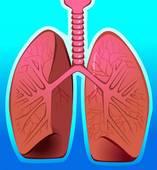 Comment s'appellent les minuscules groupes de cavités servant à la diffusion des gaz dans les poumons ?