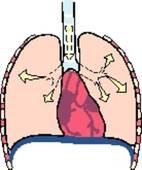 Quelle est la fréquence respiratoire chez un enfant de 1 an jusqu'à l'âge de la puberté ?