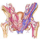 Comment sont appelés les vaisseaux lymphatiques entrant ?